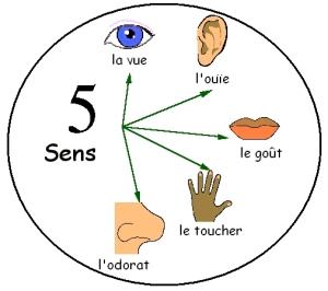Les 5 sens via tata02310