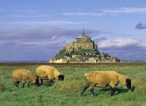 Agneaux de la baie du Mont Saint-Michel via cuisinedelamer.com