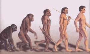 Du primate à l'homo-erectus via arpoma.com