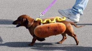 Hot dog via climaxblop.wordpress.com