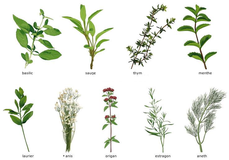 Herbes aromatiques greta garbure - Herbes aromatiques cuisine liste ...