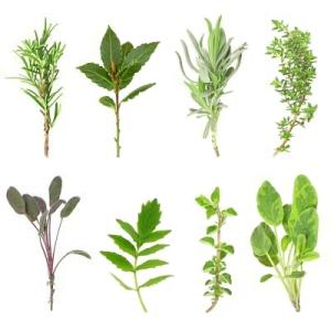 Herbes aromatiques via espaceagro.com