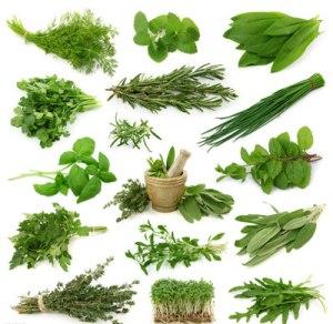 Herbes aromatiques via yangsheng.familydoctor.com.on