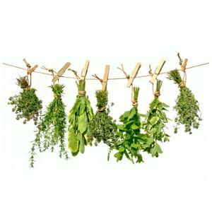 Herbes suspendues via cuisine.journaldesfemmes.com