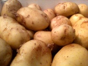Pommes de terre de l'île de Ré © Blandine Vié