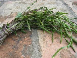 Respounchous via vermicel.canalblog.com