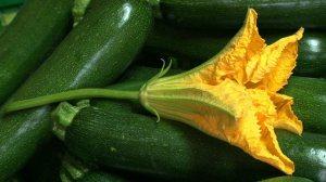 Courgette et fleur via tv5.org