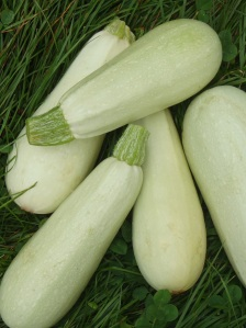 Courgettes blanches via potagerornemental.com