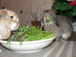 2 lapins dînant via ladureviedulapinurbain.blogspot.com