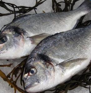 Daurade royale via le-poisson-livreur.com