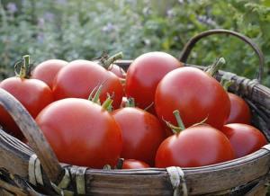 Tomates de jardin via ja6.free.fr