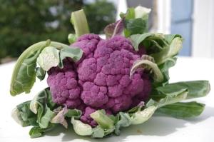 Chou-fleur violet via doudou.gheerbrant.com