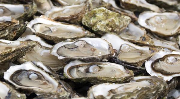 Huîtres via slate.fr