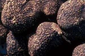 Truffes noires via bonplangratos.fr+