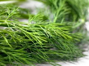 Fresh Organic Dill -Photographed on Hasselblad H3D-39mb Camera