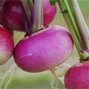 Navets violets via fermedesaintemarthe.com