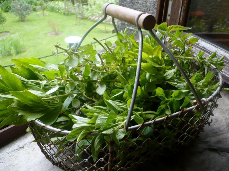 Panier d'herbes via certiferme.com