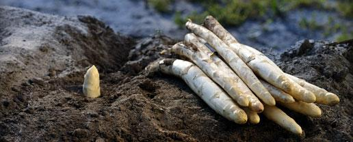Asperges des sables des Landes via primeale.fr
