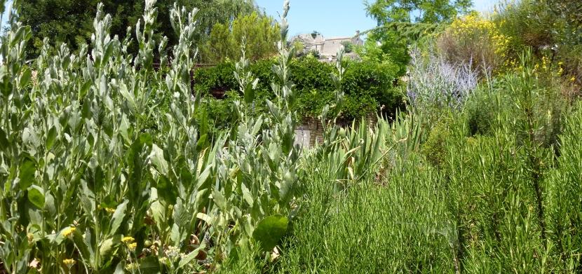 Herbes de Provence via lapyramidesaignon.com