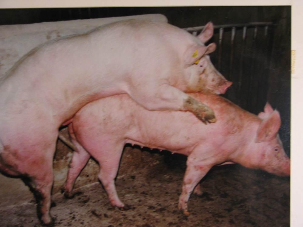 la queue de cochon chambéry bite tres grosse