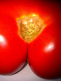 Tomate qui fait rougir © Greta Garbure