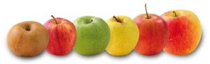 Pommes via domaine-darmandieu.com