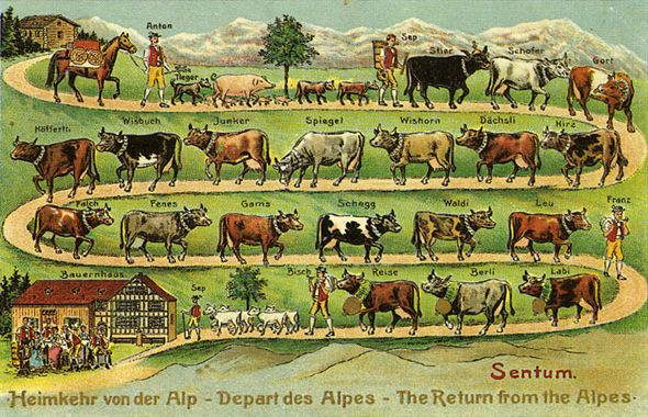 Vaches suisses via vmv.it