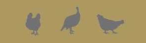 Frise volailles 2 via Synalaf
