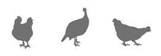 Frise volailles via Synalaf
