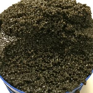 Boîte caviar Transmontanus (Italie) © Greta Garbure