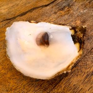Coquille d'huître © Greta Garbure