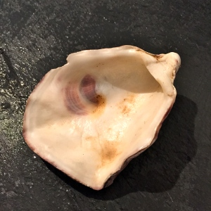Coquille d'huître face interne © Greta Garbure
