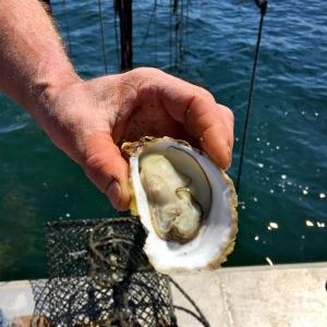 L'huître ouverte © Greta Garbure