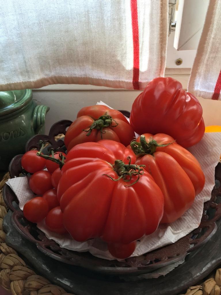 Tomates de jardin © Greta Garbure