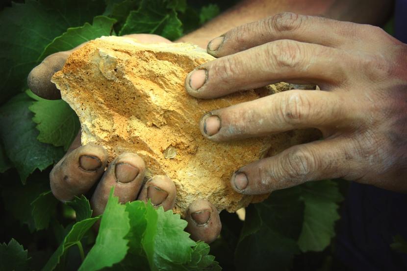 Les mains d'un vigneron © Château Bas Aumelas